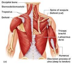 những lưu ý khi điều trị mụn lưng